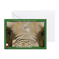 African Elephant Greeting Cards (Pk of 20)