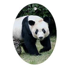 Giant Panda Bear Oval Ornament