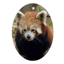Red Panda Oval Ornament