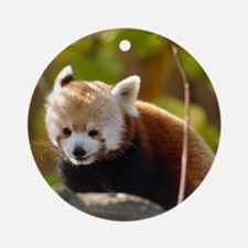 Red Panda Ornament (Round)