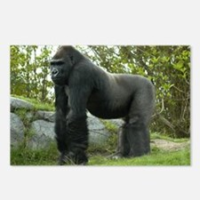 Gorilla 4 Postcards (Package of 8)