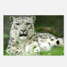 Snow Leopard 3 Postcards (Package of 8)