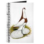 Australian Saddleback Pigeon Journal