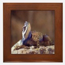 Quizzical Lizard Framed Tile