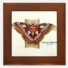 Atlas Moth Framed Tile