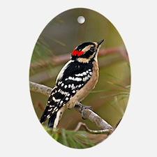 Downy Woodpecker Oval Ornament (oval)