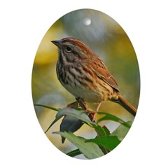 Song Sparrow Oval Ornament (oval)