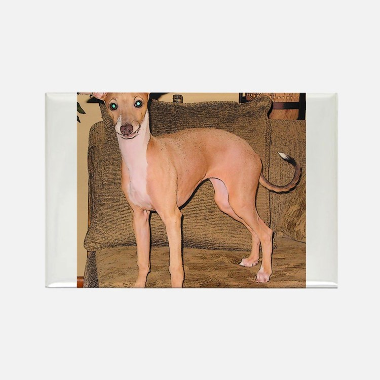 Italian Greyhound Rectangle Magnet (100 pack)