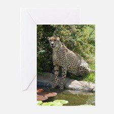 I Love Cheetahs Greeting Cards (Pk of 10)