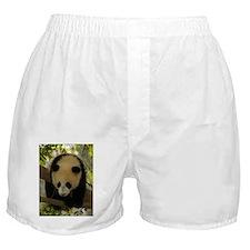 Panda Baby Boxer Shorts