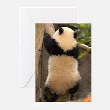 Panda Baby C Greeting Cards (Pk of 10)
