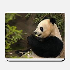 Giant Panda 4 Mousepad