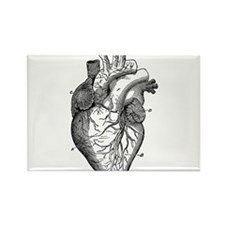 Cute Anatomical Rectangle Magnet