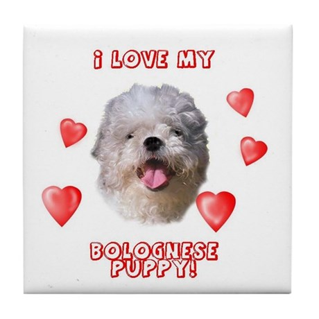 Bolognese puppy love Tile Coaster
