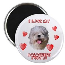 Bolognese puppy love Magnet