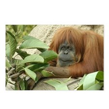 Orangutan 4 Postcards (Package of 8)