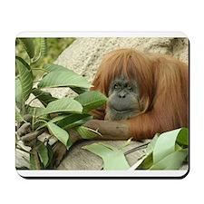 Orangutan 4 Mousepad
