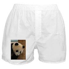 Panda Cub B Boxer Shorts