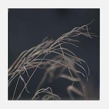 Winter Grass Tile Coaster