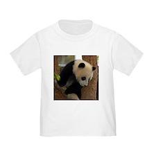 Panda Cub Square Photo T