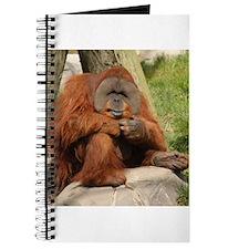 Orangutan Square Photo Journal