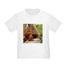 Orangutan Square Photo T