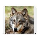 Grey Wolf Square Photo Mousepad