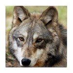 Grey Wolf Square Photo Tile Coaster