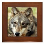 Grey Wolf Square Photo Framed Tile