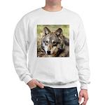 Grey Wolf Square Photo Sweatshirt