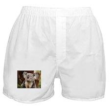 Koala Bear 10 Boxer Shorts