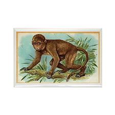 Monkey Vintage Art Rectangle Magnet