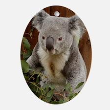 Koala Bear 9 Oval Ornament