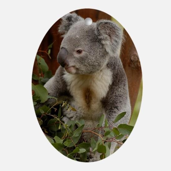 Koala Bear 7 Oval Ornament