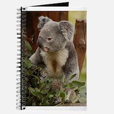 Koala Bear 7 Journal