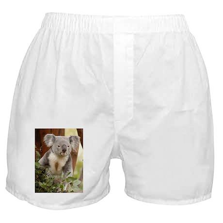 Koala Bear 6 Boxer Shorts