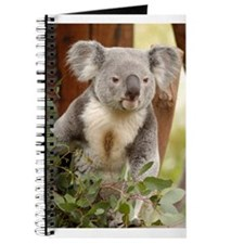 Koala Bear 6 Journal