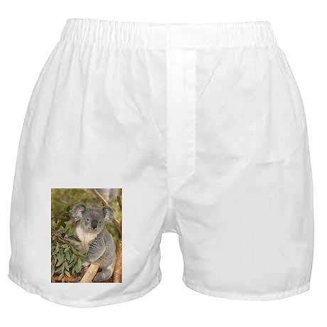 Koala Bear 4 Boxer Shorts