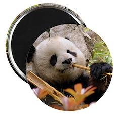 Giant Panda 7 Magnet