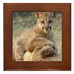 Cougar Cub 4 Framed Tile