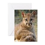 Cougar Cub 4 Greeting Cards (Pk of 10)