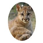 Cougar Cub 4 Oval Ornament