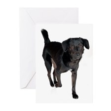 Roxy Greeting Cards (Pk of 10)
