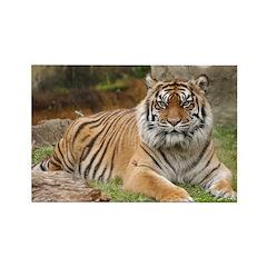 Tigress / Tiger Rectangle Magnet (10 pack)