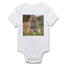 Tigress / Tiger Infant Creeper
