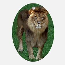 Kenya, African Lion Oval Ornament