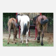 Hungry Horse Butts Postcards (Package of 8)