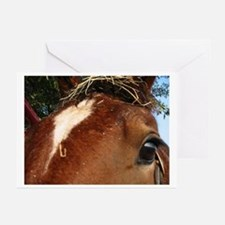 Horse Watch Greeting Cards (Pk of 10)