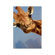 Curious Giraffe Rectangle Magnet (10 pack)