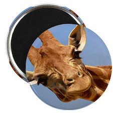 Curious Giraffe Magnet